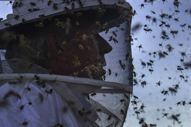 Bringing the bees