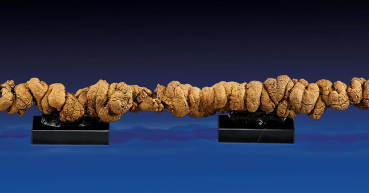 Longest Fossilized Poop To Be Sold At Auction Cbs News