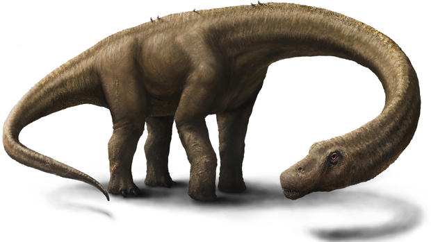 Photos: Huge dinosaur skeleton unearthed