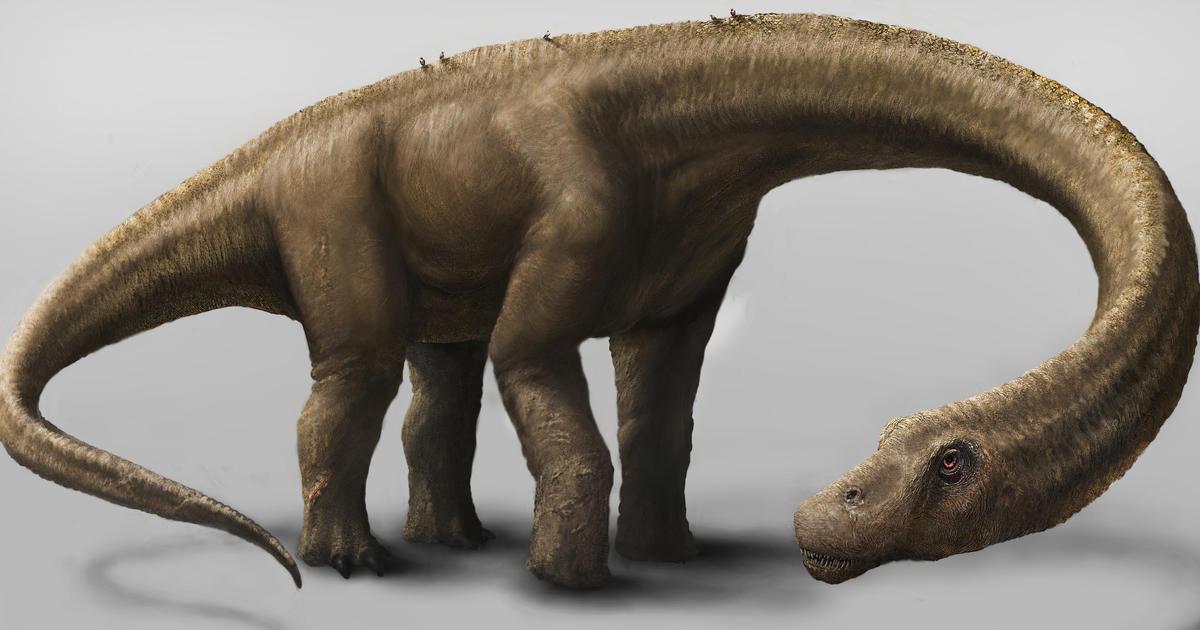 News Photos Of Giant Dinosaur Bones Found In Argentina S Patagonia Region