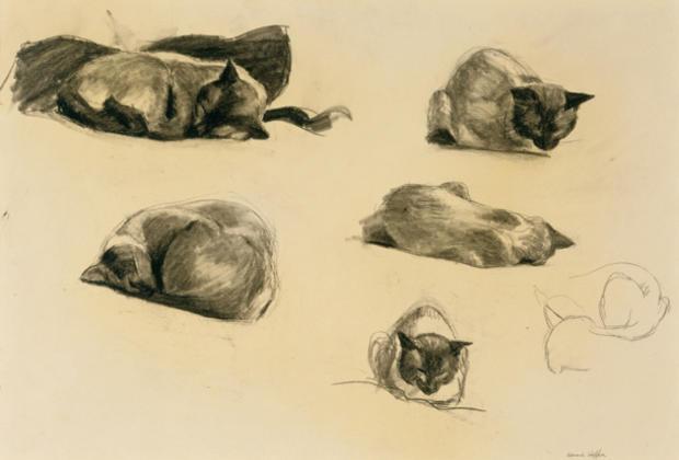 blanton-cat-study-edward-hopper.jpg