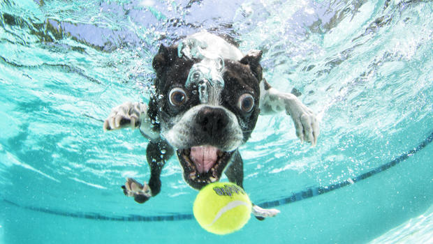 Quot Underwater Puppies Quot Takes Adorable To New Depths Cbs News