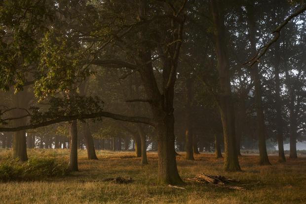 Autumn comes to Richmond Park