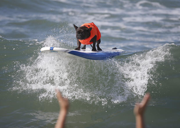 Calif. canines hang ten