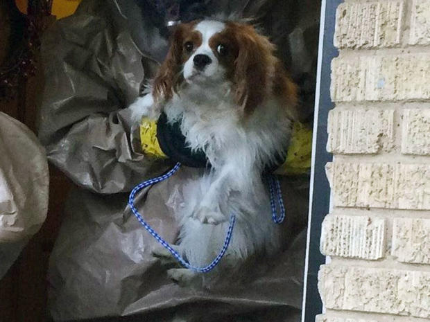 bentley ebola dog