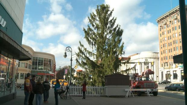 hartmanugly-tree1.jpg