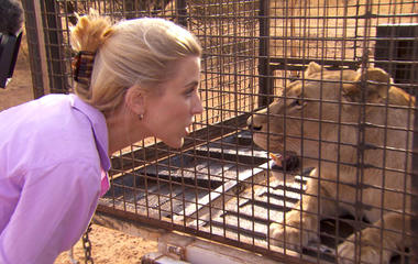 Face-to-face with lions