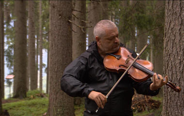 Serenading the trees in the Italian Dolomites
