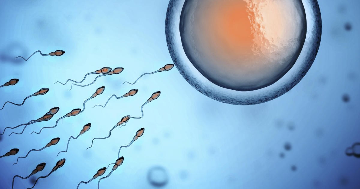 Sperm counts continue to plummet in Western nations, study finds