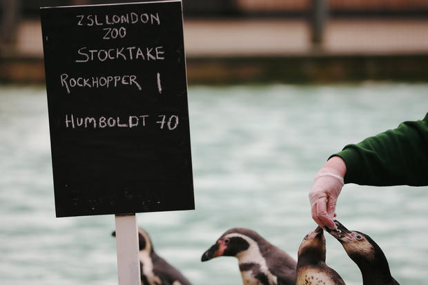 Animal count at the London Zoo