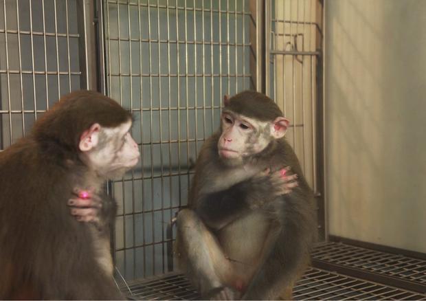 monkey-photo2.jpg