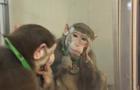 monkey-photo-copy.jpg