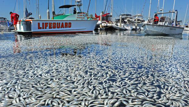 Mass Fish Death In Australia's Record-Breaking Heatwave