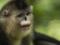 snub-nosed-monkeys-jacky-poon-8011.jpg