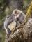 snub-nosed-monkeys-jacky-poon-2994.jpg