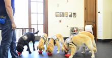 wcc-puppy-training.jpg