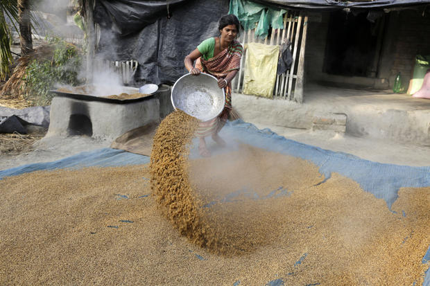 A woman spreads boiled paddy to dry outside her house at Dulki village in the Sundarbans