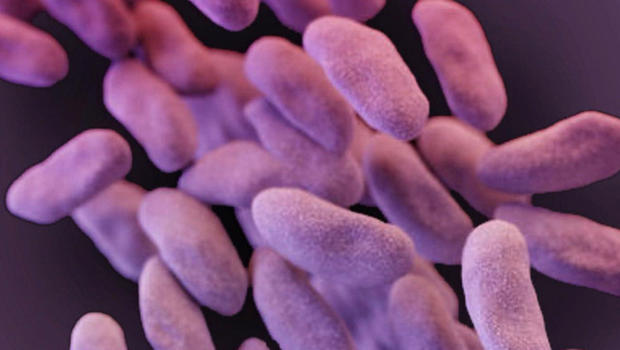 Untreatable Nightmare Bacteria is Spreading in the US According to CDC
