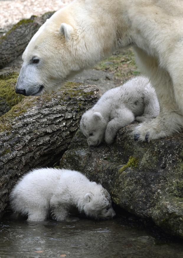 polar-bears19getty.jpg
