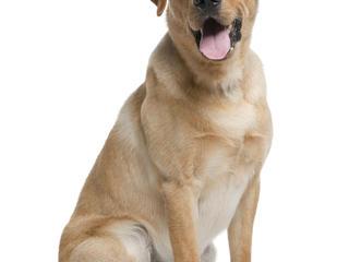 https://www.cbsnews.com/pictures/most-popular-dog-breeds-in-the-u-s/  https://cbsnews2.cbsistatic.com/hub/i/r/2016/02 ...