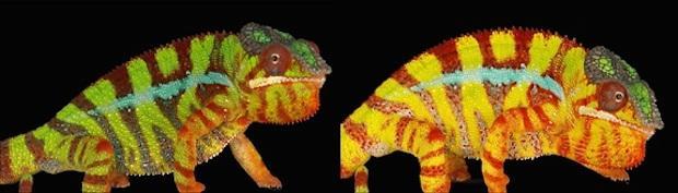 chameleon7.jpg