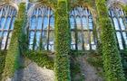 ivy-walls.jpg