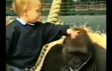 Would you let your toddler play with a gorilla?