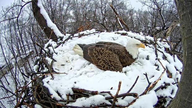 eaglecamuntitled-1.jpg