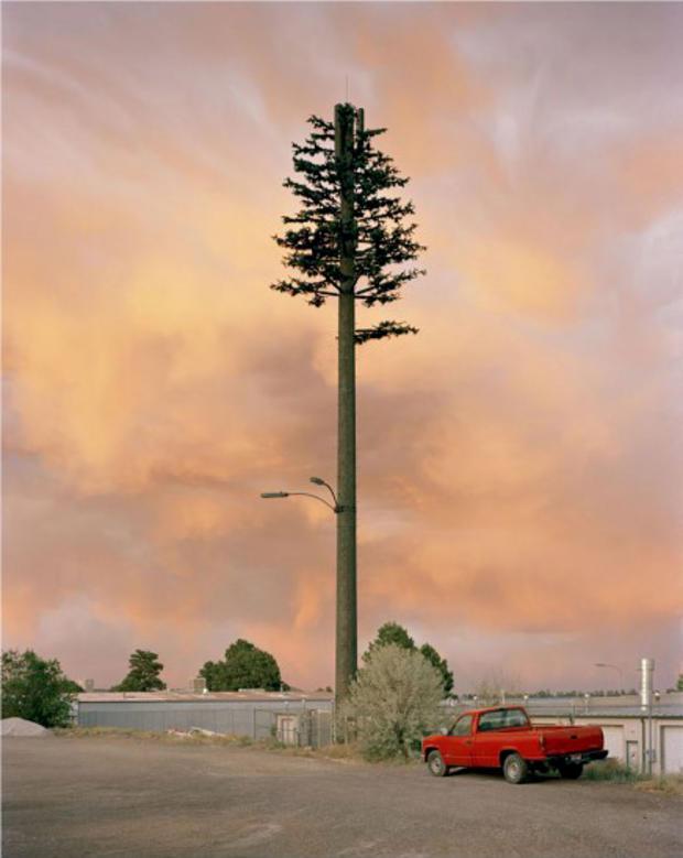 robert-voitnew-treesindus-436x550.jpg