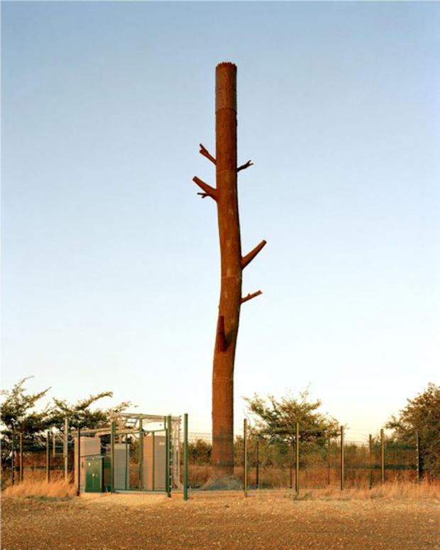 robert-voitnew-treeshundo1-436x550.jpg