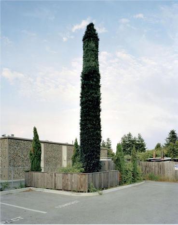 Awkward Trees