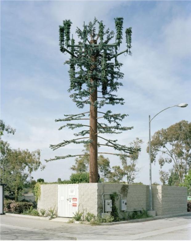 robert-voitnew-treesvirgi-436x550.jpg