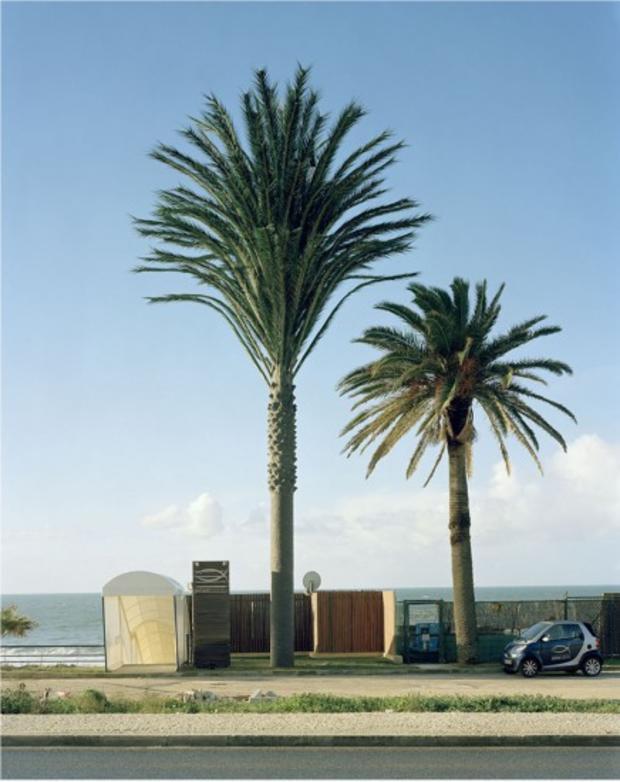 robert-voitnew-treesestor1-436x550.jpg