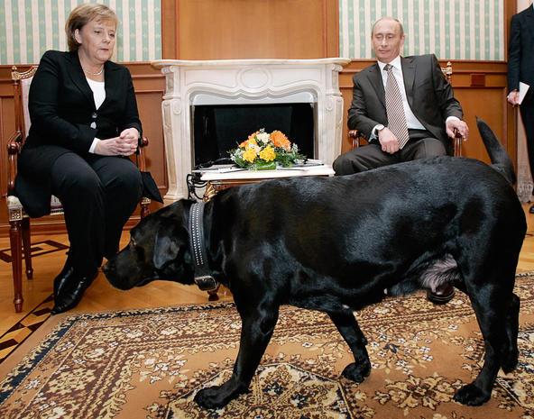 Puppy Love President Animal Lover Professional Wild Man Russia S Vladimir Putin Never Fails To Put On A Show Cbs News