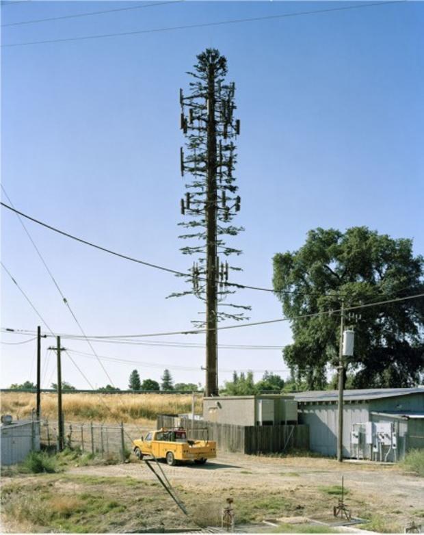 robert-voitnew-treeslinde-436x550.jpg