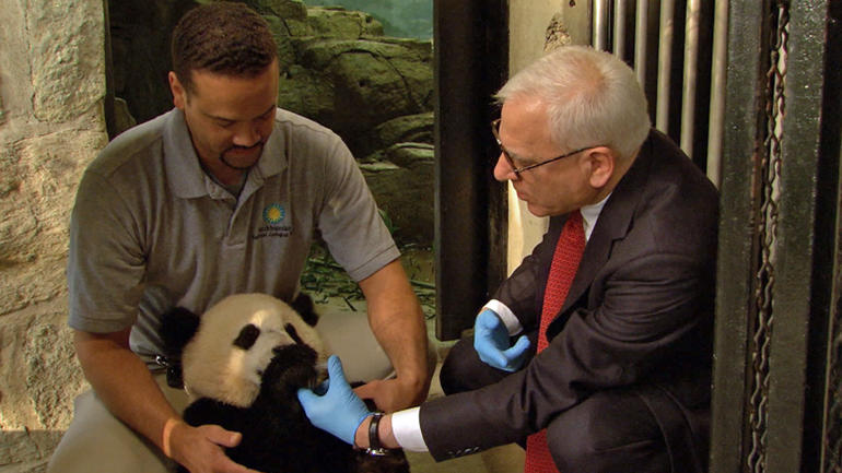 national-zoo-panda-exhibit-5.jpg