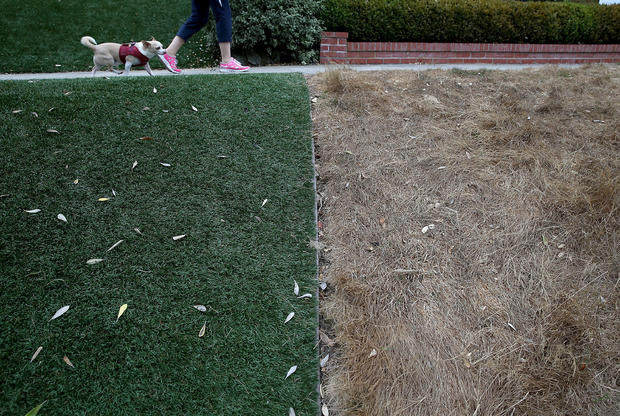 lawns452187600.jpg