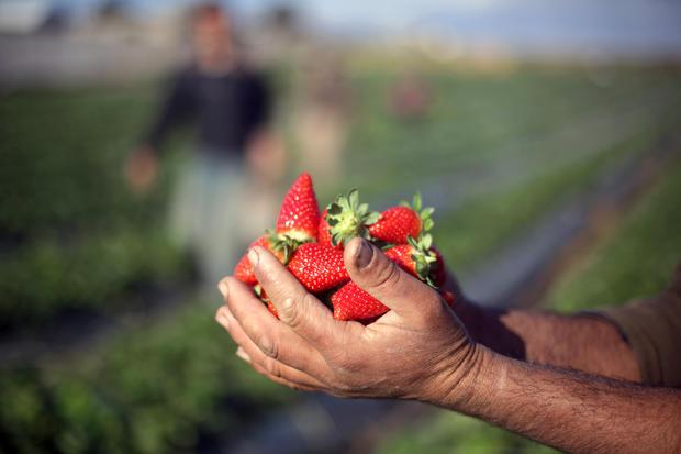 berries454763403.jpg