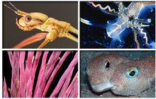 Top 10 coolest new species