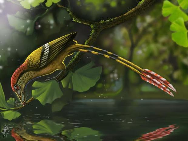 flashy-tail-bird-enanthiornites-arte-deverson-pepi.jpg