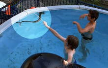 Python sneaks into swimming pool with kids