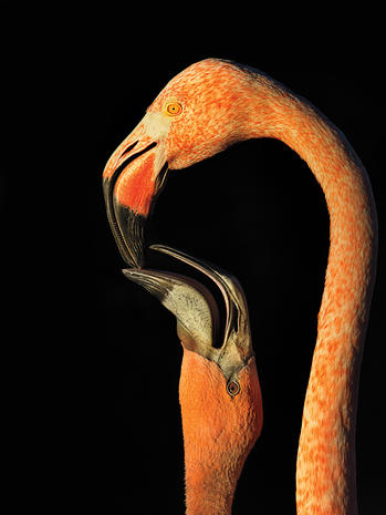 2015 Audubon Photography Awards