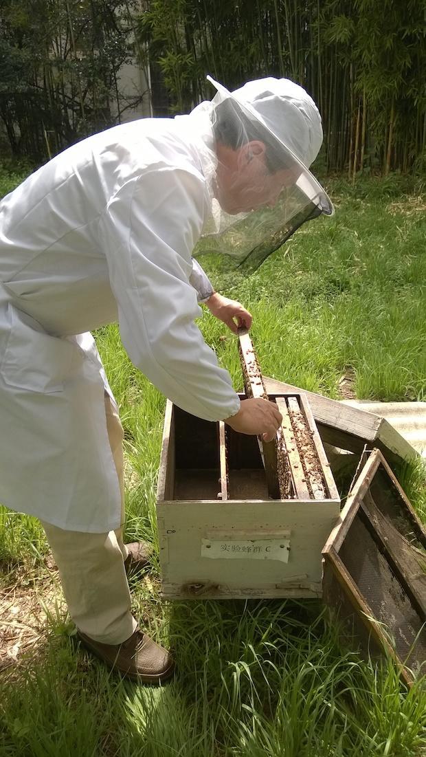 asian-honeybee.jpg