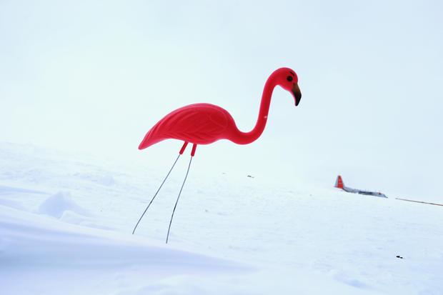 Pink plastic lawn flamingo creator dies