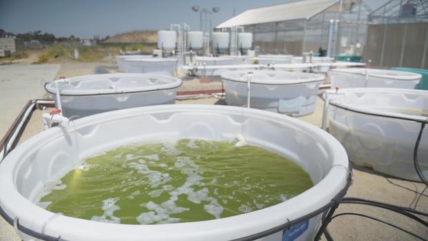 sustainable-surf-7-algae-bubbling.jpg
