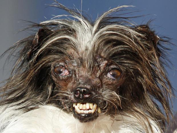 World's Ugliest Dog Contest 2015