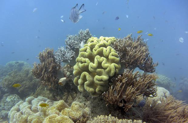 The deteriorating Great Barrier Reef