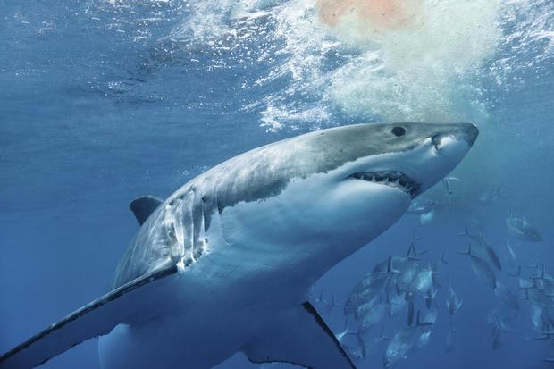 Teenager Attacked In North Carolina Shark Attacks Warning Graphic Images Cbs News