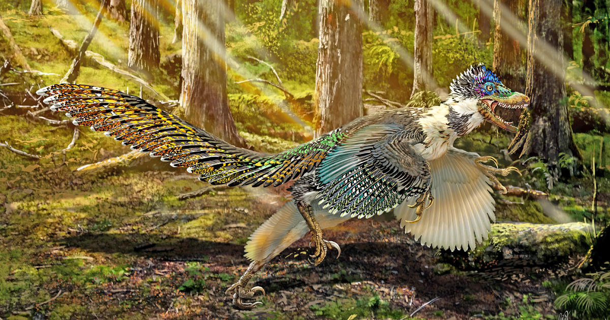 newfound dinosaur looked like a bloodthirsty peacock cbs