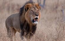 Minnesota residents outraged by illegal lion killing